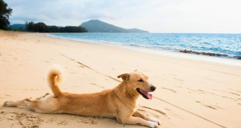 Relocating to Panama – With your PET